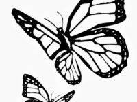 Трафареты бабочек для декора своими руками шаблоны