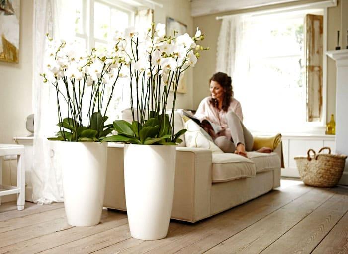 Вечноцветущие растения в напольных вазах всегда делают комнату яркой и свежей
