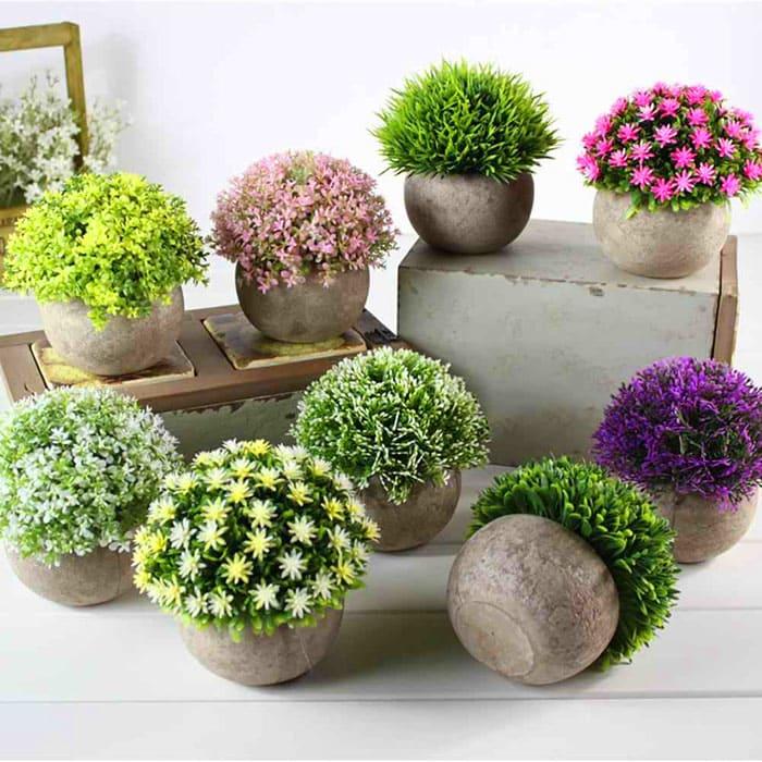 Пластик или бетон — любому материалу горшка найдётся свой цветок