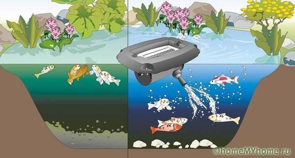 Обязательным условием существования рыбы является использование аэрационного оборудования