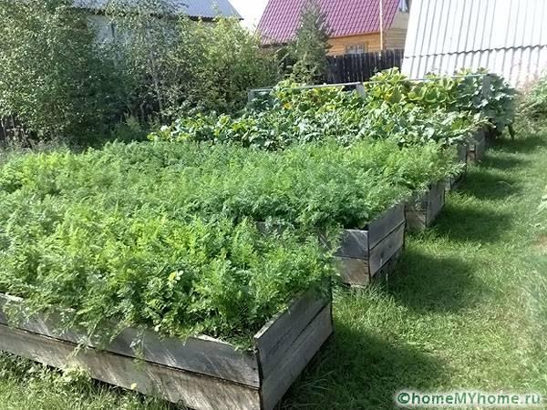 Правильный уход гарантирует здоровье растений и хороший урожай