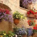 Оформление клумбы и цветника ? возле дома своими руками — красивые фото цветов в частном дворе