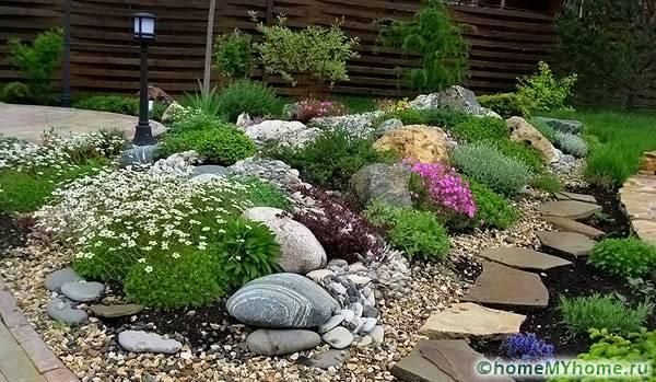 Какие выбрать растения для альпийской горки фото и названия