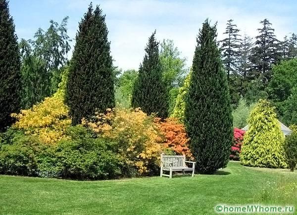 Композиция деревьев и кустарников