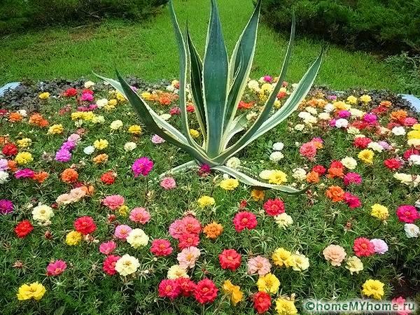 Комбинация растений по росту