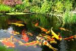 пруд для разведения рыбы своими руками пошаговая инструкция