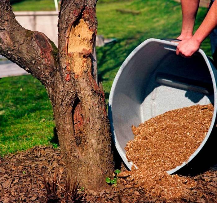 Садовым плодоносным деревьям придется по вкусу компост, только высыпайте его правильно
