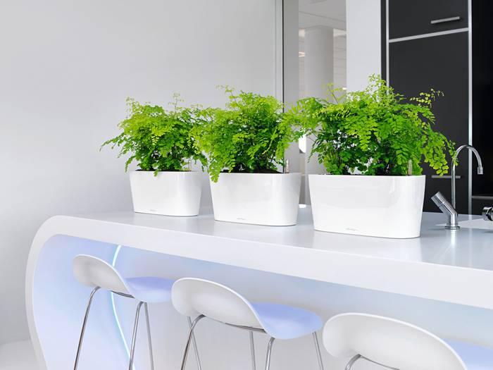 Контейнеры с растениями создают благоприятный микроклимат и являются превосходным украшением интерьера