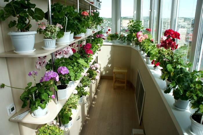 Качественно утеплённый балкон может превратиться в зимний сад
