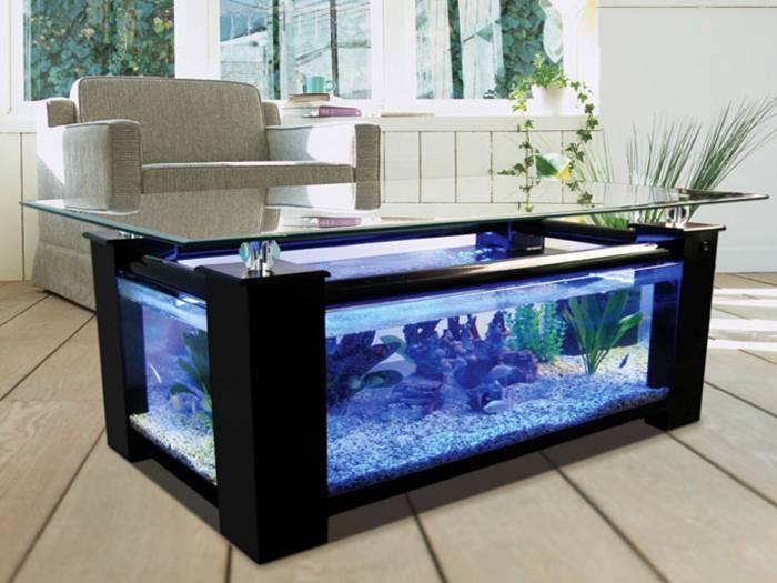 Красивый и необычный аквариум – украшение и естественный увлажнитель