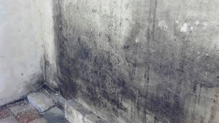 Стена пораженная опасной черной плесенью