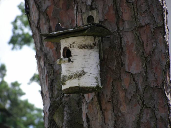 Птичник из бревна – наиболее близкий вариант к природным условиям обитания