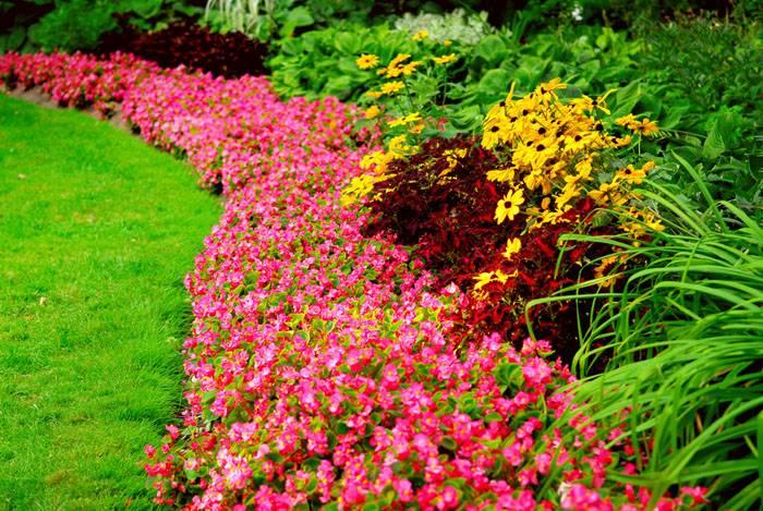 В качестве живой ограды высаживают лаванду, самшит, хосты, гвоздики