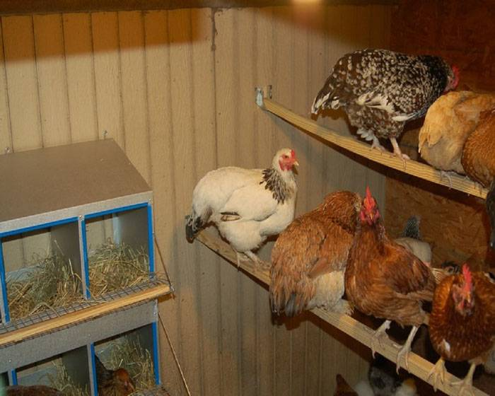 Пример куриного домика внутри