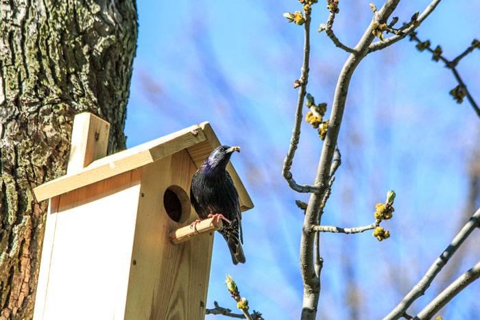Жёрдочка должна быть круглой, и не толстой. Птицам с маленькими лапками будет удобнее удержаться на ней