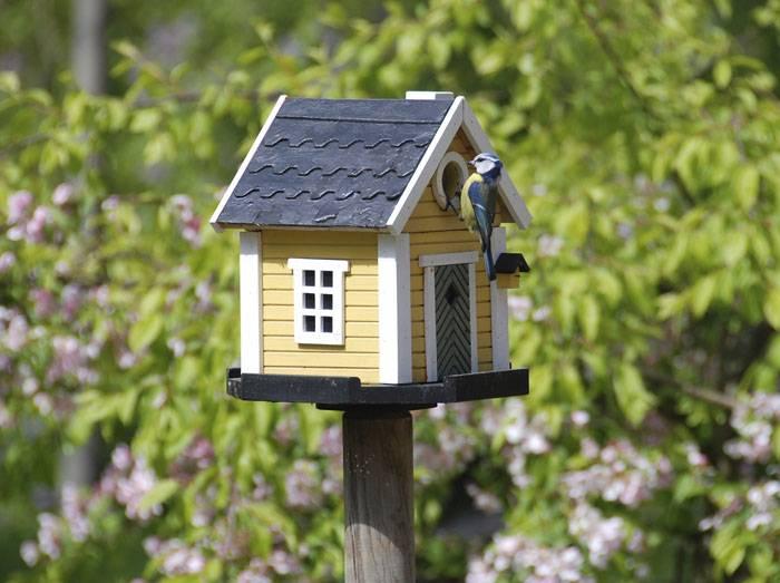 Леток для этих маленьких птичек тоже меньше – всего три с половиной сантиметра в диаметре