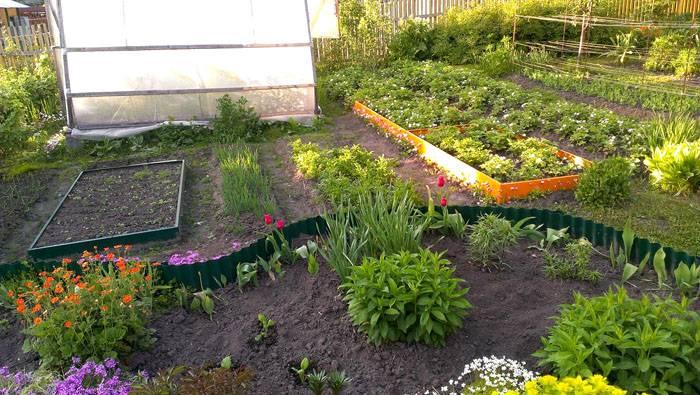 Оформление посадок в огороде пластиком