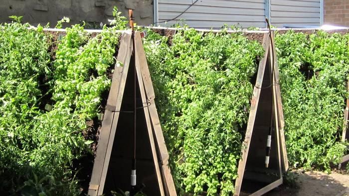 Богатый урожай клубники на вертикальных грядах