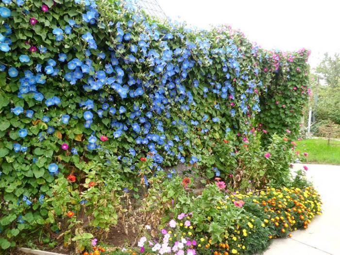 Великолепное цветение