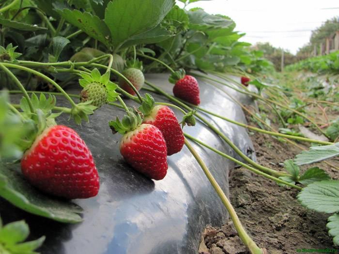 Урожайность растет, а собирать плоды легче