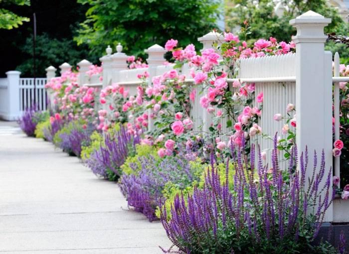 Выбирая, комбинации из растений, важно учитывать цветовую палитру при цветении
