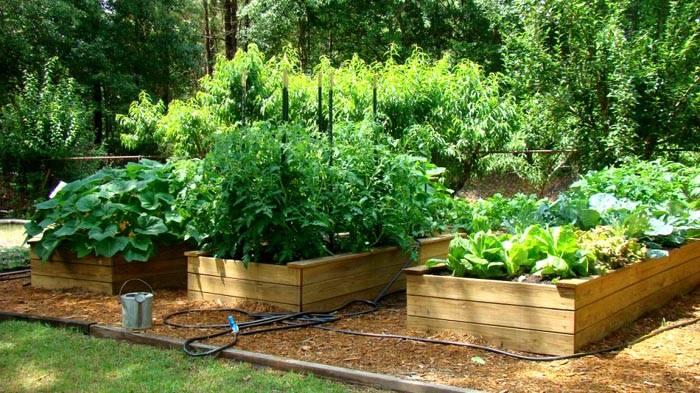 Установка вдали от деревьев и построек – отличное решение, которое поспособствует формированию крупного урожая