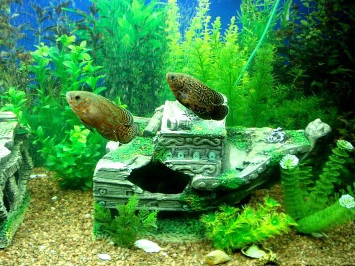 При созданиигрота для аквариума своими рукамиможно применить остатки изделий из керамики