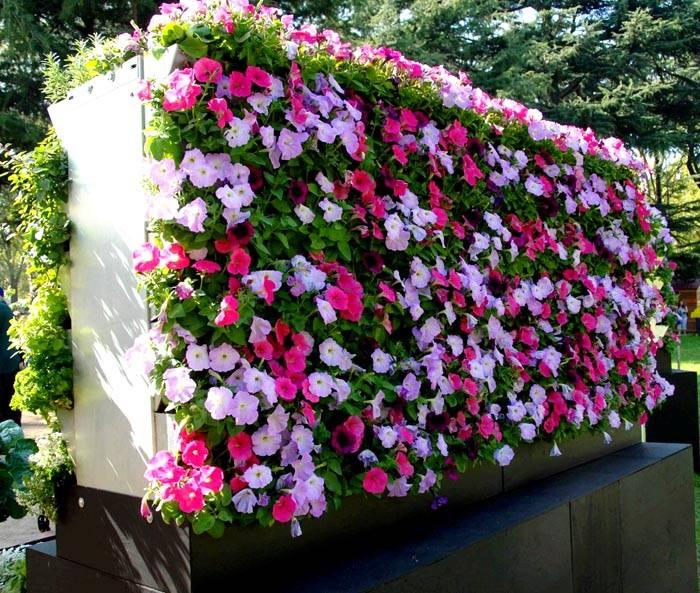 Если не знаете, как озеленить маленький участок – используйте вертикальные клумбы. В них можно разместить практически любые цветы