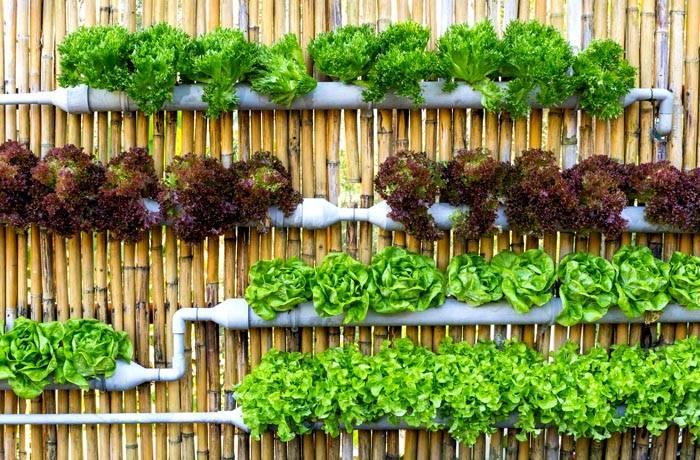 Хорошо смотрятся на оградах и стенах частного дома подвесные контейнеры с зеленью