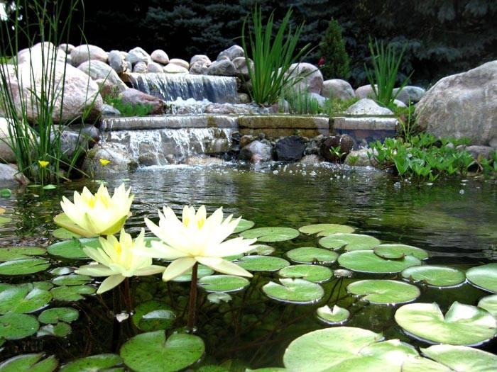 Можно высадить в водоеме кувшинки или водяные гиацинты и лилии