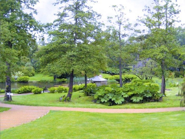 Просто и красиво: естественный ландшафт на участке загородного дома