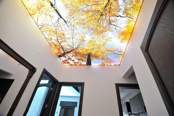 Популярный тренд – натяжные потолки с принтом и подсветкой