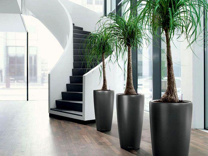 Сделать пространство уютнее помогут крупные растения в напольных горшках