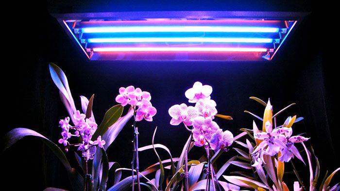 УФ подсветка стимулирует рост и развитие зеленой массы