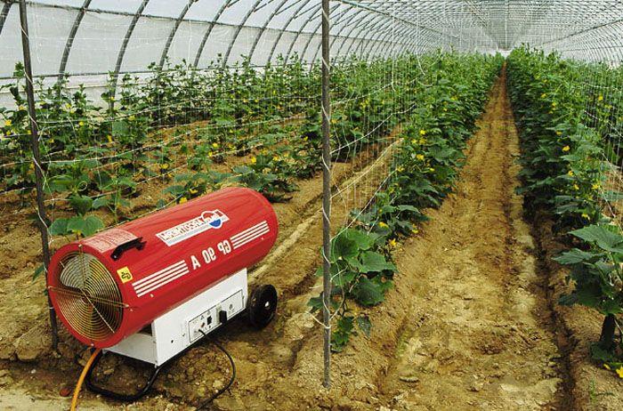 Наличие тепловой пушки позволит обезопасить с/х культуры, выращиваемые в теплицах, от понижения температуры внешнего окружающего воздуха