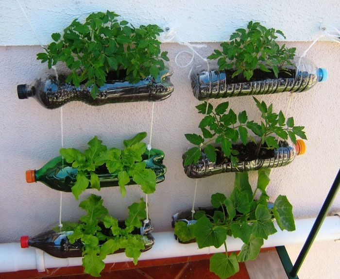 Крупные бутыли пригодятся для предварительного выращивания рассады в домашних условиях