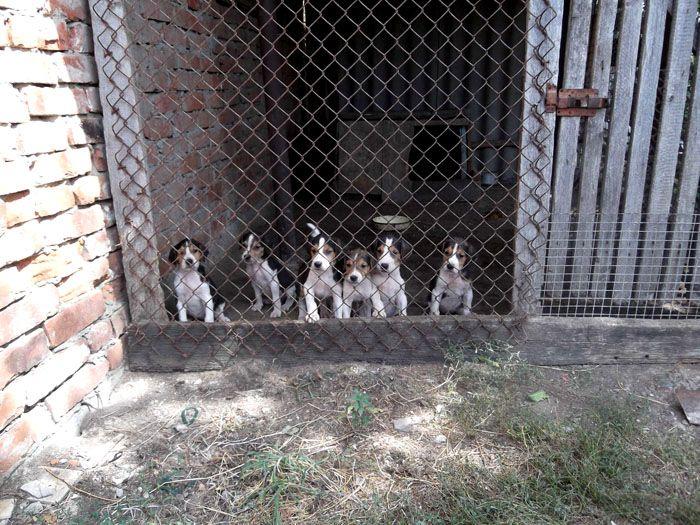 Для собаки с выводком тоже нужна «квартира» в полтора раза больше