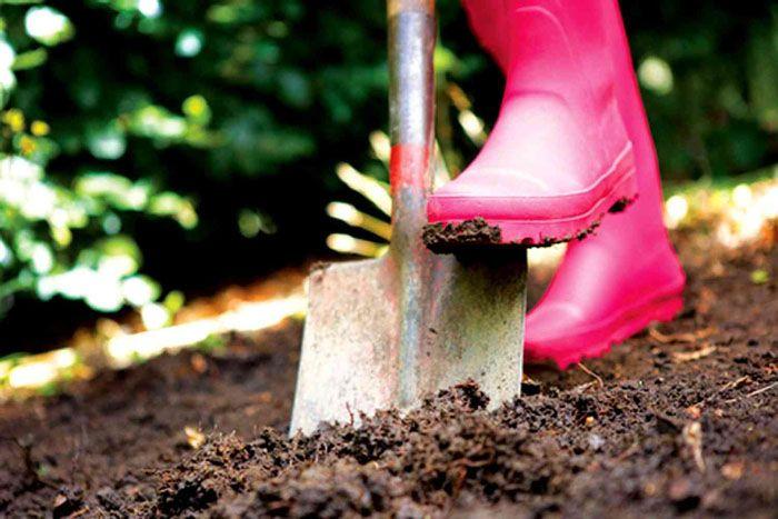 Землю под стационарным парником нужно очистить от сорняков, обеззаразить и перекопать, чтобы вымерзли личинки вредителей