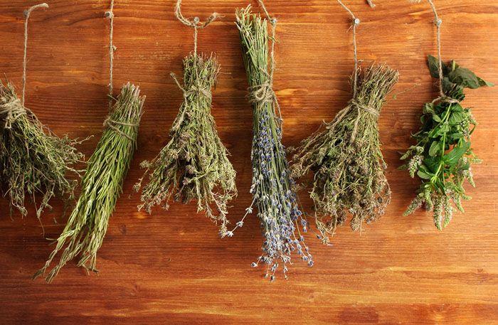 Пучки растений раскладывают в кухонных шкафчиках, можно использовать свежие или сушёные травы. Вредители будут обходить этим места стороной