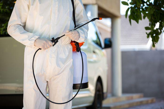 Есть существенный плюс: после работы дезинсекторов у вас не будет не только тараканов, но и комаров, мух, клопов, клещей, блох, пауков и прочих членистоногих
