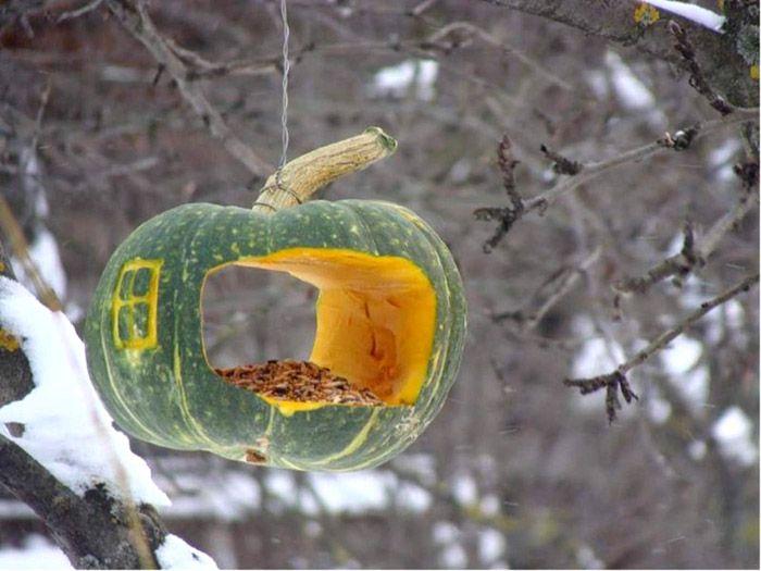 Вкусный корм в корме — птицам явно понравится необычнаяяркая столовая из тыквы