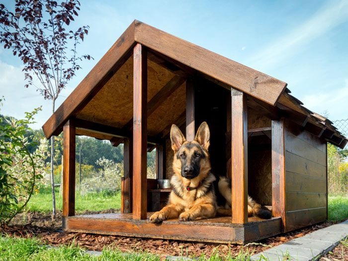 Сторожевые собаки с хорошим подшёрстком не нуждаются в особо утеплённых будках, но в регионах с суровым климатом нужно позаботиться о том, чтобы ваш четвероногий друг не замёрз
