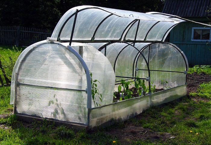 В «Бабочке» вы сможете вырастить рассаду томатов, огурцов, перца и капусты. Здесь будет хорошо чувствовать себя редиска, салатная зелень и огурцы