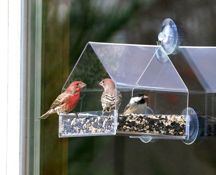 Прозрачный материал открывает глазу всё птичье великолепие