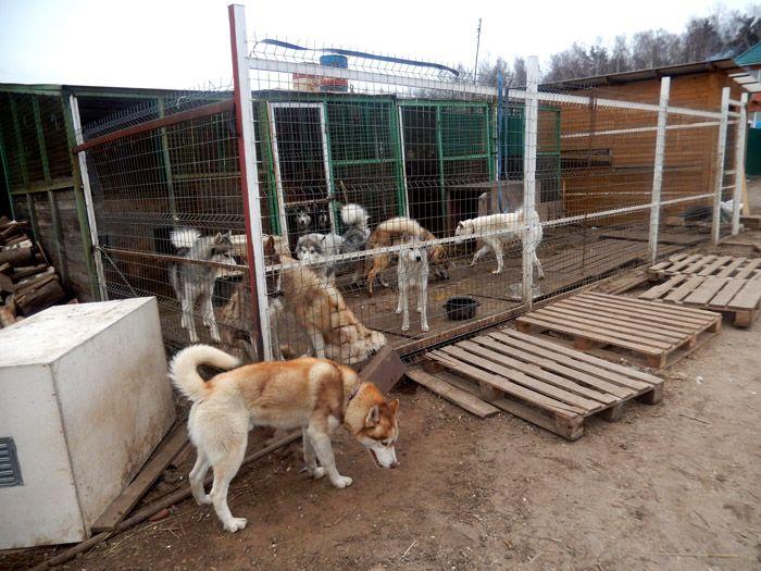 Крупные собаки могут сломать хлипкие сооружения