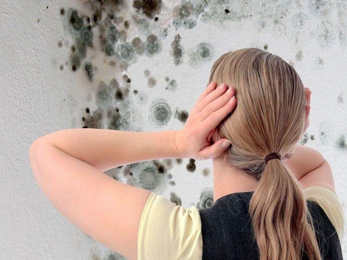 Высокий уровень влажности провоцирует образование плесени, опасной для человеческого организма