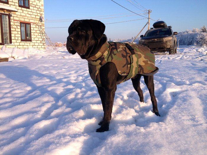 Если стоят сильные морозы, добавьте побольше подстилки и оденьте пса в попону из сукна