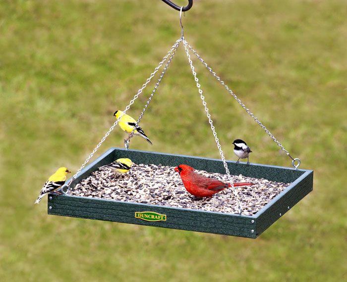 Кормушка-площадка также привлекает немало голодных пташек