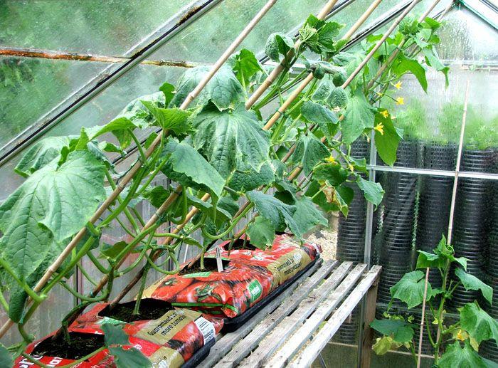 Масштабная теплица из стекла и дерева: такую постройку не демонтируешь с наступлением зимы, но и прослужит она не один сезон