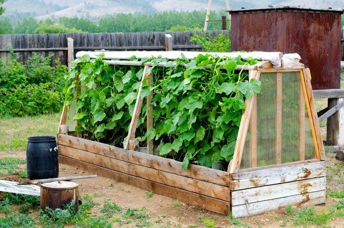 Деревянный короб и деревянный каркас с натягиваемой сверху плёнкой — большие урожаи огурцов обеспечены